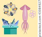 seafood, shellfish, squid 43084927