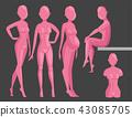 人體模型 模型 模特 43085705