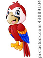 Vector illustration of funny macaw bird cartoon 43089104