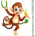 animal, ape, banana 43089106