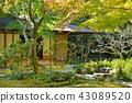 tearoom, tea arbor, Japanese Gardens 43089520