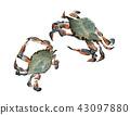 螃蟹克勞福德螃蟹 43097880