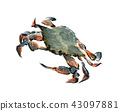 螃蟹克勞福德螃蟹 43097881