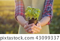 pot, basil, herb 43099337
