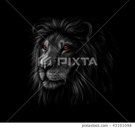 Portrait of a lion head on a black background 43101098