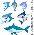 Cartoon shark collection set 43101235