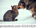 cat, dog, animal 43101929