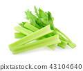 Fresh celery isolated on white background 43104640