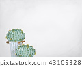 Cactus on grey background 43105328