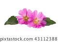 ดอกไม้,กระโจมเยิร์ต,ดอกไม้บาน 43112388