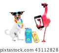 animal, bird, dog 43112828