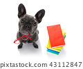 smart dog and books 43112847