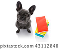 smart dog and books 43112848