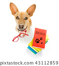 smart dog and books 43112859