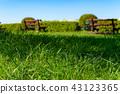 여름 잔디와 나무 그늘 푸른 하늘과 벤치의 배경 흐림 b 43123365