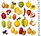 Exotic tropical fruits vector icons 43126747