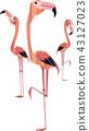 flamingo flamingoes flamingos 43127023