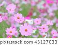 ดอกไม้ฤดูใบไม้ร่วง 43127033