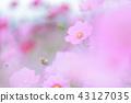 ดอกไม้ฤดูใบไม้ร่วง 43127035