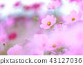 ดอกไม้ฤดูใบไม้ร่วง 43127036