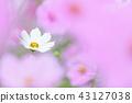 ดอกไม้ฤดูใบไม้ร่วง 43127038