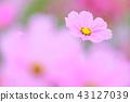 ดอกไม้ฤดูใบไม้ร่วง 43127039