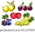 Autumn fruits set Vector realistic. Plums, apple 43137464