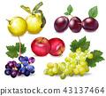 realistic autumn fruit 43137464