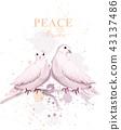 bird, pigeon, pigeons 43137486