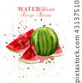 Watercolor watermelon fruit Vector 43137510