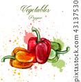 pepper vegetable vegetables 43137530