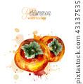 Persimmon fruits watercolor Vector. delicious 43137535