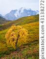 tree, landscape, mountain 43138272
