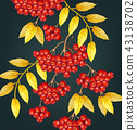 rowan berries leaves 43138702