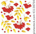 Rowan berries in autumn 43138704