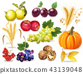 Autumn fruits and vegetables collection 43139048