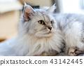 แมวอาวุโสอายุ 16 ปี 43142445