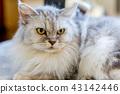 แมวอาวุโสอายุ 16 ปี 43142446