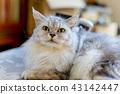 고양이, 실내, 동물 43142447