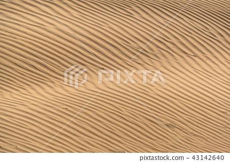Beautiful sand dune in Thar desert. 43142640