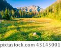 mountain, forest, landscape 43145001