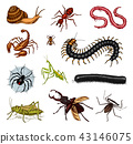 Big set of insects. Vintage Pets in house. Bugs Beetles Scorpion Snail, Whip Spider, Worm Centipede 43146075