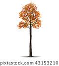 red autumn tree 43153210