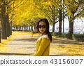 가을, 은행나무, 나무 43156007