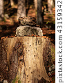 Tree Stump with Stones in the Woods 43159342