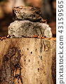 Tree Stump with Stones in the Woods 43159565