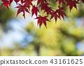 奈良梅花鹿公園 43161625