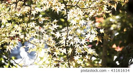 奈良貝加卡公園 43161634