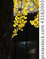 奈良梅花鹿公園 43162003