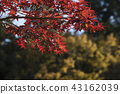 奈良梅花鹿公園 43162039
